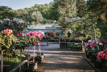 Reuthe's gardens