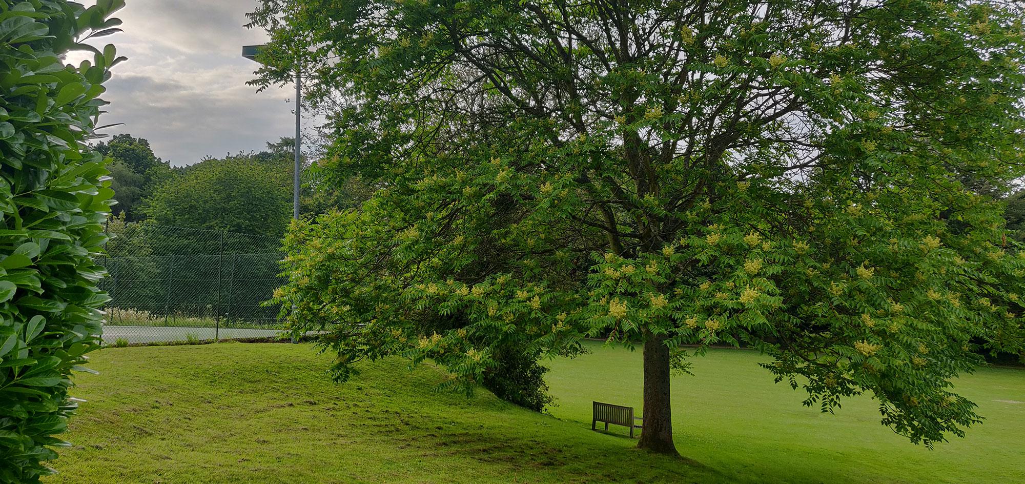 Ightham recreation ground