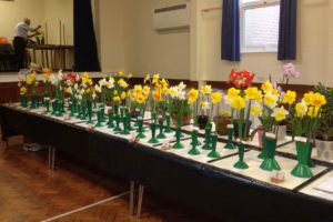 daffodils on table display at a spring fair 2017