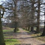 Knole Park, Sevenoaks
